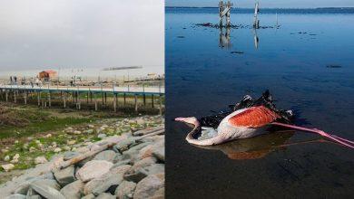 Photo of خلیج گرگان تا مرگ قطعی چهار سال زمان دارد